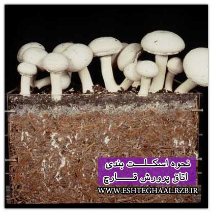 پرورش قارچ